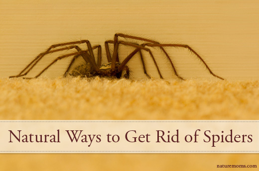 Get Rid of SPiders Naturally - No Chemicals!