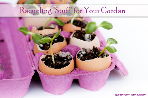 Green seedlings growing out of soil in egg shells