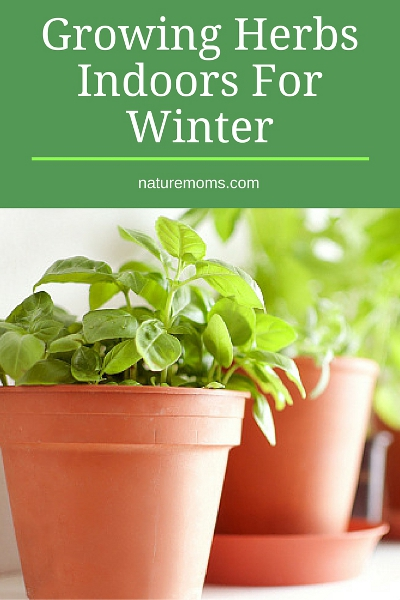 Growing Herbs Indoors For Winter