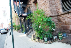 gardens-new-york-sm