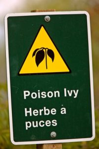 natural ways to remedy poison ivy