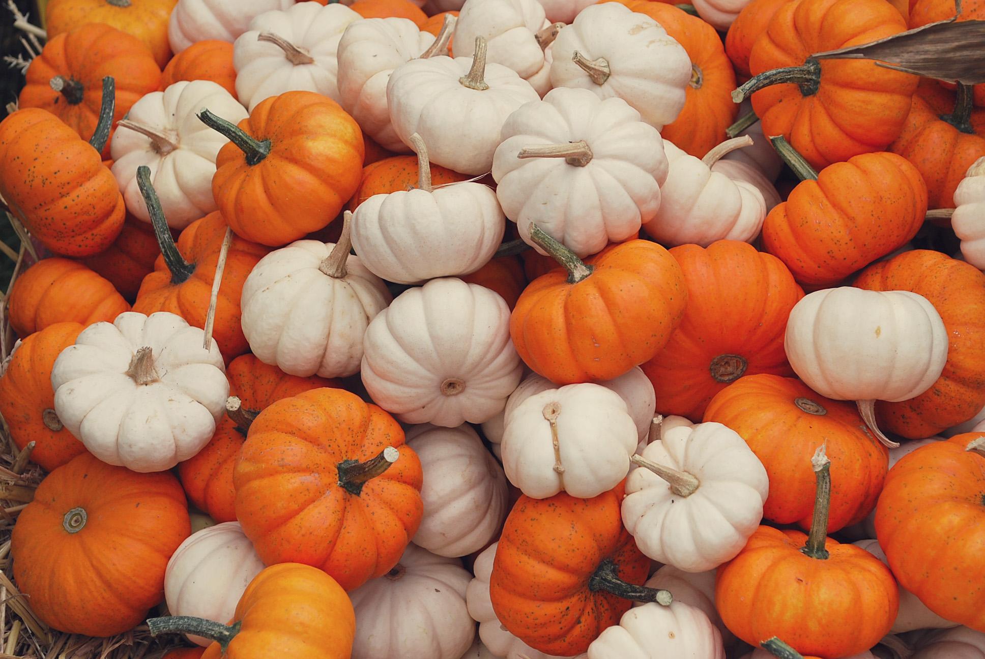 mini pumpkins - Fall Pumpkins