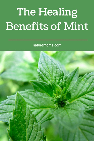 The Healing Benefits of Mint