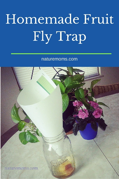 fruit slang how to make a fruit fly trap