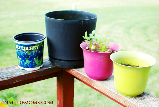 salad bar porch pots