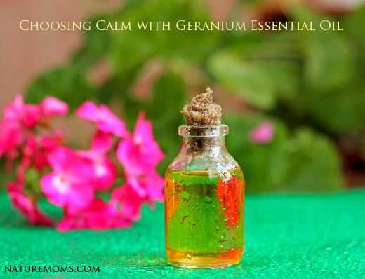 Geranium oil in glass bottle