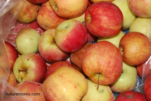 bushel apples sm