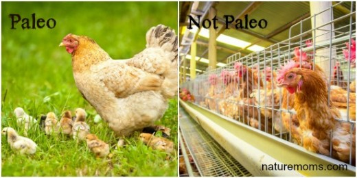 paleo versus not paleo meat eating can be sustainable