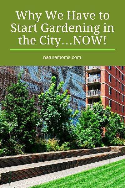Start Gardening in the City Now