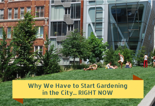 Why We Have to Start Gardening in the City