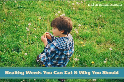 Healthy Weeds You Can Eat & Why You Should - NatureMoms.com