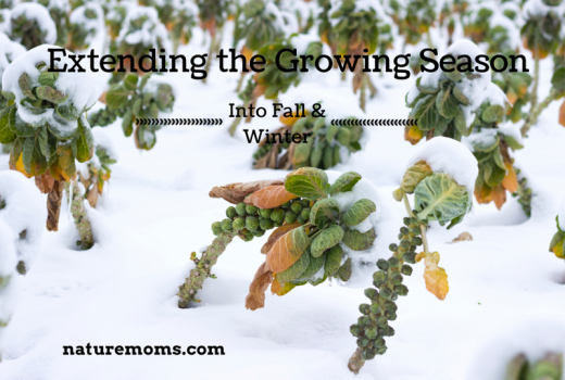 Extending the Growing Season Into Fall and Winter