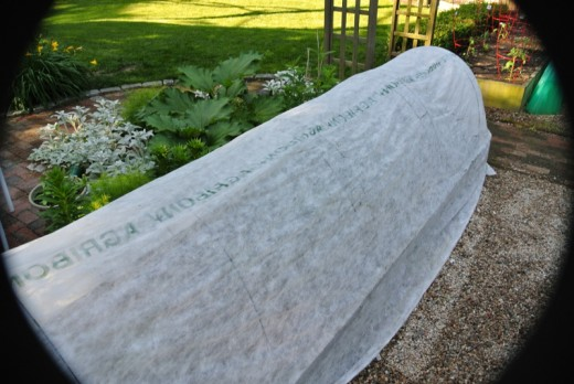 row cover for vegetable gardening in the winter