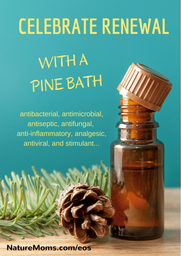 celebrate renewal with pine essential oil