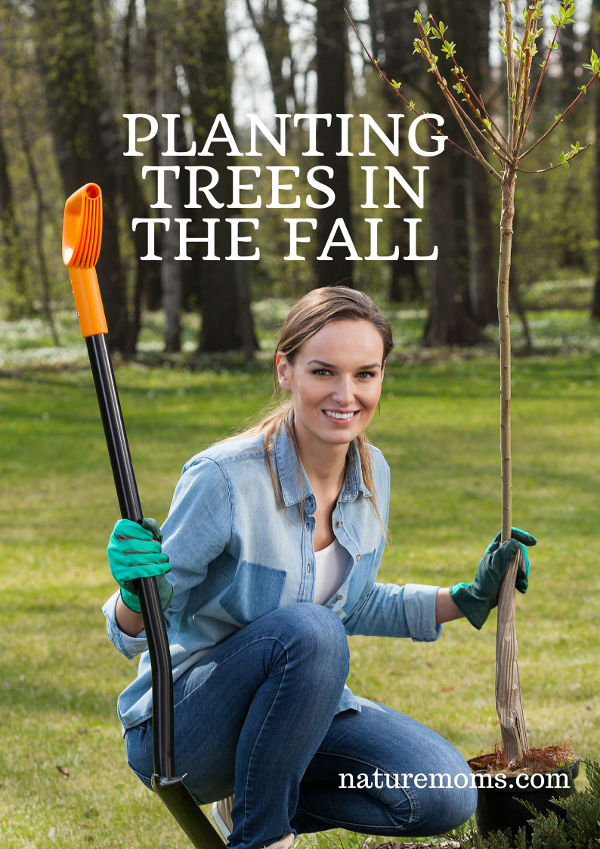 Planting fruit trees in the fall nature moms blog nature moms - Planting fruit trees in autumn ...