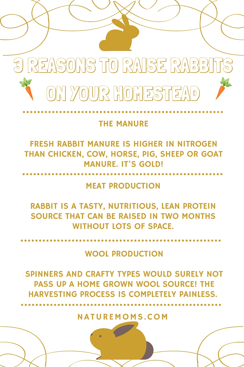 3 reasons to raise rabbits homestead