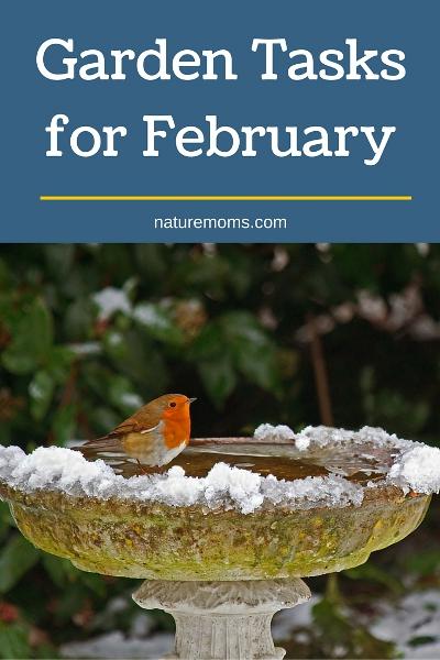 Garden Tasks for February