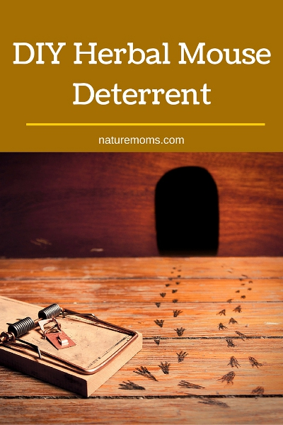 DIY Herbal Mouse Deterrent