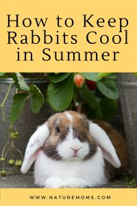 How to Keep Rabbits Cool in Summer