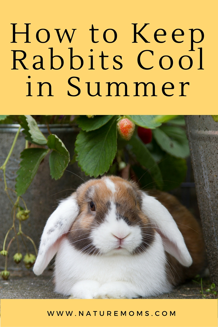 Keep Rabbits Cool Summer