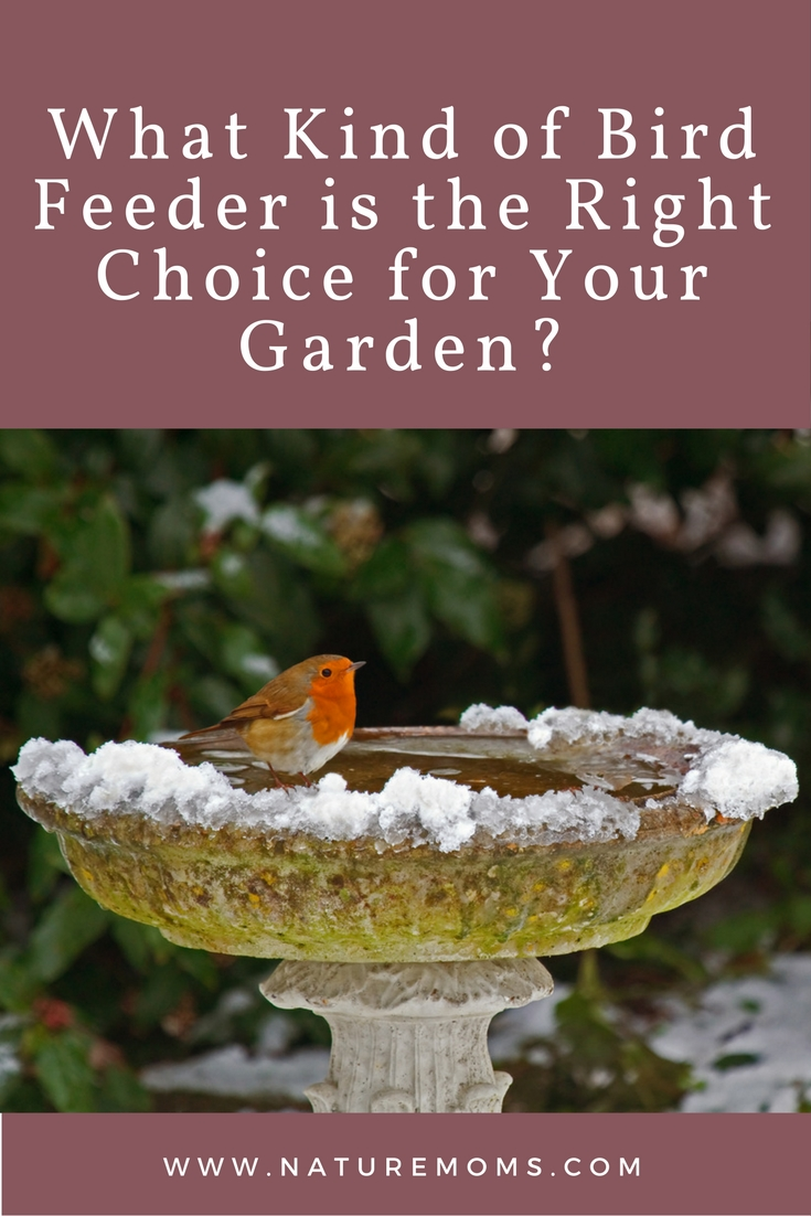 what-kind-of-bird-feeder-is-right