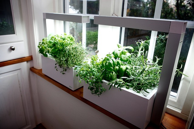 Are You Planning To Build Your Indoor Herb Garden? Did You Know That Having  Your Indoor Garden Has A Lot Of Advantages? Get To Know How You Can Create  Your ...