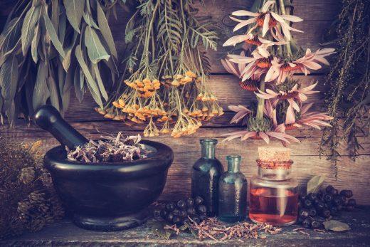 online herbalism course