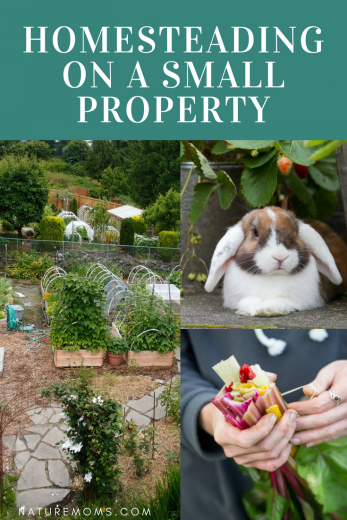 Homesteading on a Small Property