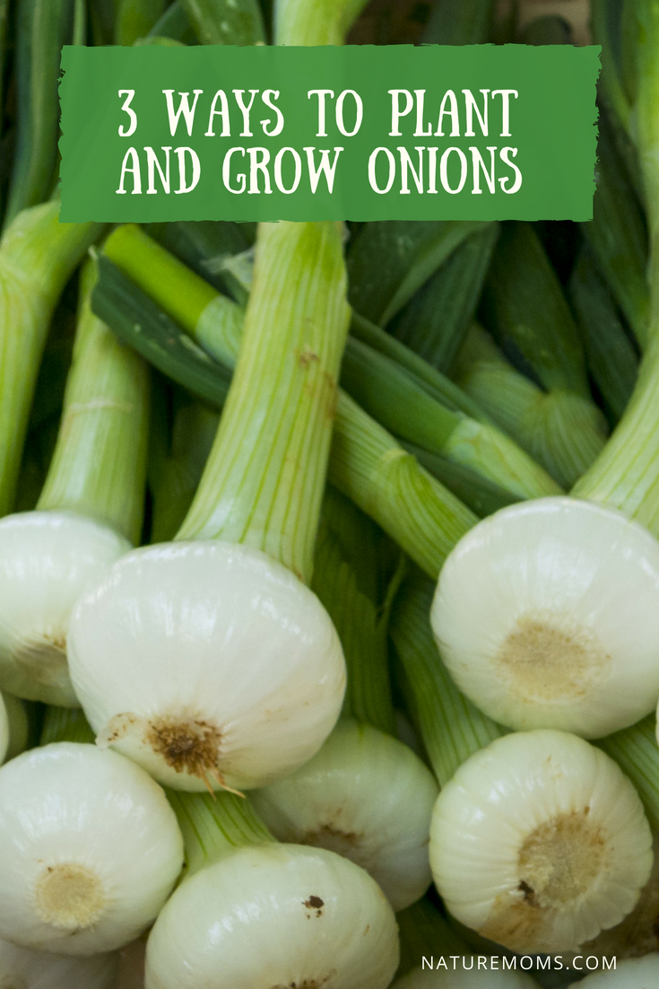 3 Ways to Plant and Grow Onions