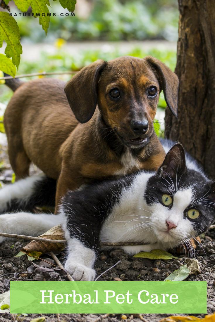 Herbal Pet Care